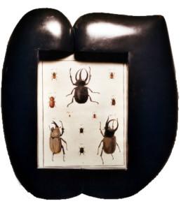 Planche d'insectes XVIIIème, cadre bois façon ébène
