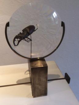 Présentation d'un scarabée sur un socle loupe, bois et laiton patiné